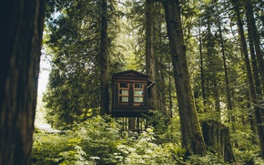 Picture forest, trees, house, Washington