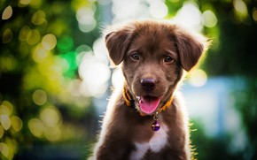 Picture cute, puppy, light, Labrador, puppy, dog, bokeh, cute