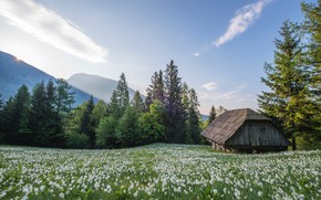 Picture the sky, grass, the sun, light, trees, flowers, house, hut, hut