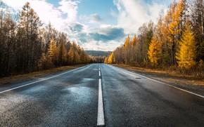 Wallpaper road, autumn, trees, asphalt