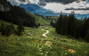 Wallpaper forest, track, grass, summer, clouds, hills, meadow, field, path, ate, village, mountains, landscape, houses, clouds