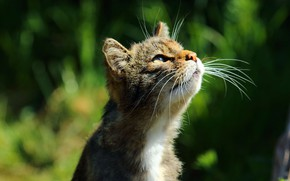 Picture blur, muzzle, looking up, tabby cat