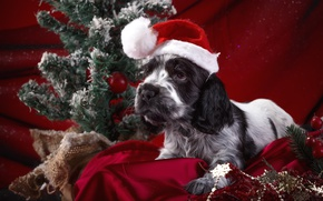 Picture holiday, hat, puppy, pillow, Spaniel, decor