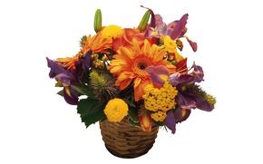 Picture white background, basket, gerbera, irises