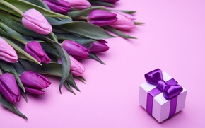 Wallpaper bouquet, tulips, love, pink, bow, fresh, pink, flowers, romantic, tulips, gift, purple