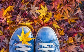 Wallpaper leaves, laces, autumn, sneakers
