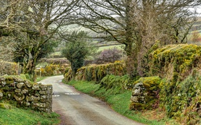 Picture road, trees, stones, England, moss, Widecombe in the Moor