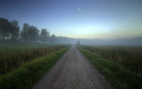 Picture road, fog, field, morning