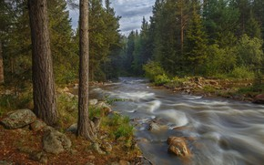 Picture forest, trees, river, stream