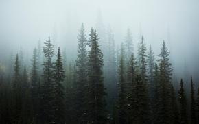 Wallpaper snow, trees, nature, fog