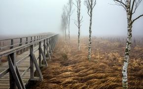 Picture bridge, fog, birch