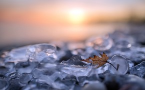 Wallpaper nature, sheet, ice