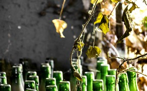 Picture leaves, background, bottle