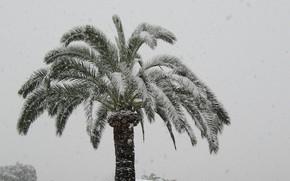 Picture winter, snow, Palma, France, Cagnes-sur-Mer
