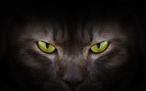 Wallpaper eyes, look, green, black, eyes, cat, black cat