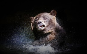 Picture water, nature, bear