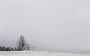 Picture winter, field, snow, trees, nature, fog
