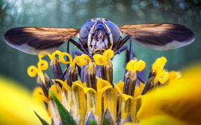 Picture flower, eyes, nature, wings, head, insect, gorzalka