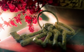 Picture flowers, background, keys