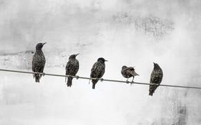 Wallpaper background, birds, wire