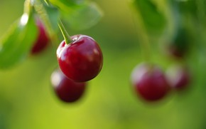 Picture summer, macro, nature, cherry, berries, beauty, harvest, fruit, cottage