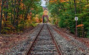 Wallpaper railroad, forest, autumn