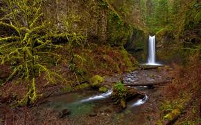 Picture greens, forest, trees, stream, stones, waterfall, moss, USA, Oregon, driftwood, Wiesendanger Falls