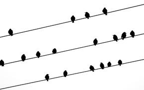 Picture birds, background, wire