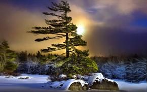 Picture winter, night, tree