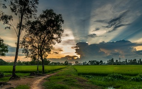 Picture greens, field, the sky, grass, clouds, trees, Vietnam, path
