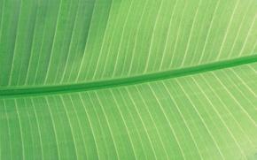 Picture macro, nature, sheet, green, veins