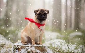 Wallpaper winter, each, dog