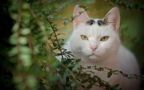 Picture cat, look, leaves, branches, portrait, muzzle, beauty