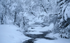Picture winter, forest, snow, river, polynya, rapids