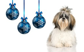 Picture balls, holiday, dog, Christmas balls, the year of the Dog