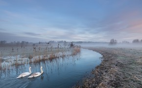 Wallpaper river, swans, fog