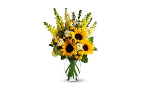 Picture sunflowers, flowers, roses, bouquet, yellow, white background, vase, snapdragons, antirrhinum