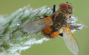 Picture drops, macro, nature, fly, background, plant, insect, wings