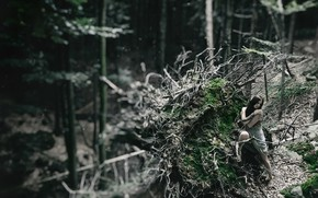 Wallpaper tree, roots, girl, forest