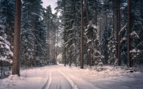 Wallpaper winter, road, forest, snow, trees, Poland, Poland, Knyszyn Forest Landscape Park, Knyszyn Forest