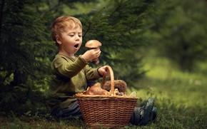 Wallpaper basket, mushrooms, spruce, surprise, boy, delight