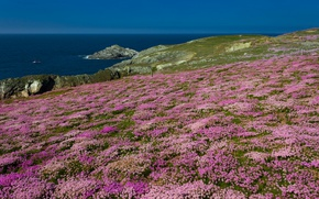 Picture sea, flowers, rocks, England, Cornwall