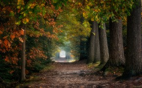 Picture the tunnel, track, autumn Park