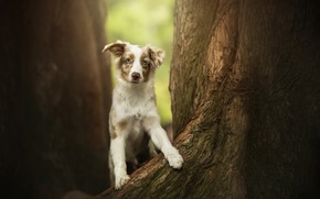 Picture tree, dog, spot, puppy