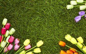 Picture grass, flowers, spring, colorful, tulips, flowers, tulips, spring, green grass