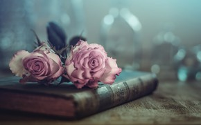 Picture flowers, roses, book