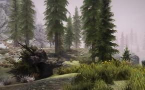 Picture grass, mountains, fog, stone, spruce, grass, stone, mountain, fog, skyrim, Skyrim, fir-tree, elder scrolls, tes …