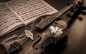 Wallpaper notes, music, violin