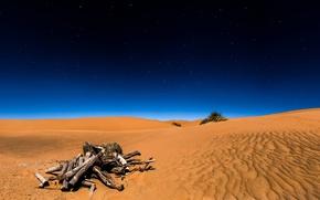 Picture sand, the sky, stars, night, desert, Sahara, driftwood, the Sahara desert, Sugar