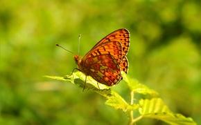 Wallpaper Butterfly, Spring, Macro, Macro, Spring, Butterfly
